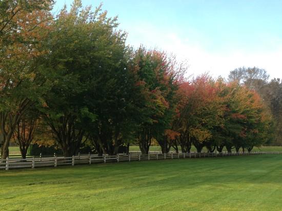 Maplehurst Farm, October 2013